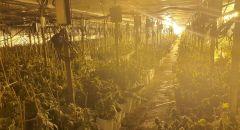 الكشف عن مزرعة كنابس تحت الأرض في مركز البلاد واعتقال 7 مشتبهين