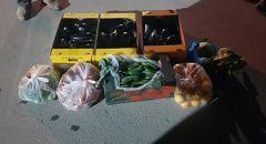 رهط : اعتقال مشتبه بسرقة محصول زراعي