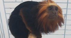 اعتقال 3 مشتبهين بشبهة سرقة قرد من حديقة الحيوانات في كريات موتسكين