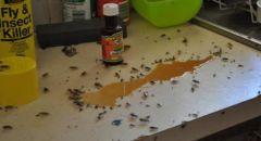 التخلص من صراصير المطبخ