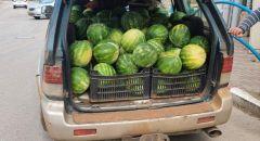 إعتقال أب وإبنه من عرابة بشبهة سرقة طن من البطيخ