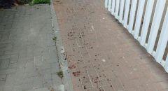 الشرطة تعتقل شاب بعد ان طعن والده في كريات حايم
