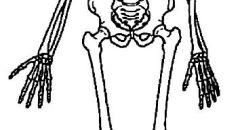 مدينة أشكلون ,,, العثور على عظام بشرية