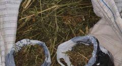 النقب: العثور على 13.2 كيلوغرام من الماريخوانا في مبنى مهجور