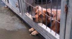 انتشار داء الكلب في البلاد والصحة الاسرائيلية تحذر من مخالطة الحيوانات