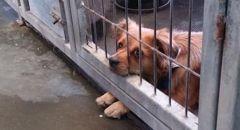 وزارة الصحة تحذر من داء الكلب: حيوانات مصابة بداء الكلب في منطقة الشمال