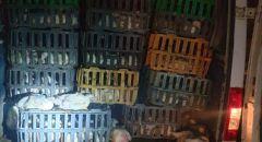 اعتقال مشتبهين من الناصرة ودير الاسد بشبهة نقل 800 دجاجة ولحوم بطريقة غير قانونية