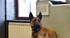 الكلاب بمطار هلسنكي تكشف وجود كورونا أسرع من الاختبار التقليدي