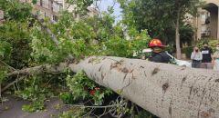 بيتح تكفا: مواطنان ينجوان بأعجوبة بعد انهيار شجرة على سيارتهما