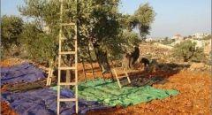 في أعقاب التماسٍ قدّمه مزارعون فلسطينيّون إلى المحكمة العليا: الجيش يلغي الإجراء الذي يقيّد الدّخول إلى الأراضي الواقعة في منطقة التماسّ