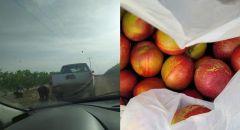 اعتقال 3 مشتبهين بسرقة محصول زراعي بمنطقة النقب