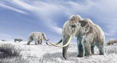العلماء يستخرجون أقدم حمض نووي من حيوانات الماموث المنقرضة