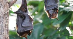 """""""صائدو الجراثيم"""" يكتشفون مرضا نادرا ينتقل عن طريق الخفافيش والطيور في ألبرتا"""