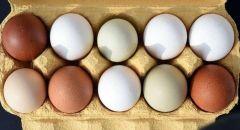 طرق بسيطة تساعدك على معرفة البيض الطازج من التالف