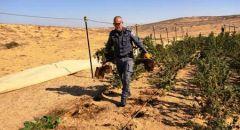 """مداهمة 41 مجمعا لزراعة المخدرات في مناطق تدريب للجيش  في """"تسيئليم"""""""