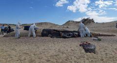 سلطة الطبيعة: الحوت نفق نتيجة مادة الزفت واصدار أمر حظر نشر حول كارثة تلوث الشواطئ