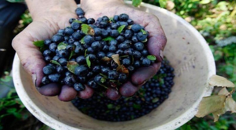 فاكهة يمكن لإدراجها في النظام الغذائي تحسين الإنسولين وتخفيض نسبة السكر في الدم