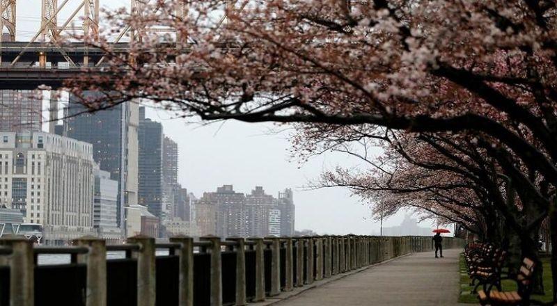نيويورك,,,  تسجيل 630 حالة وفاة بكورونا والمجموع يرتفع إلى 3565