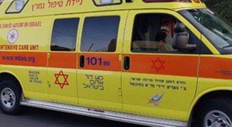 البعينة نجيدات: إصابة شابة بجراح  بعد تعرضها لركلة حصان