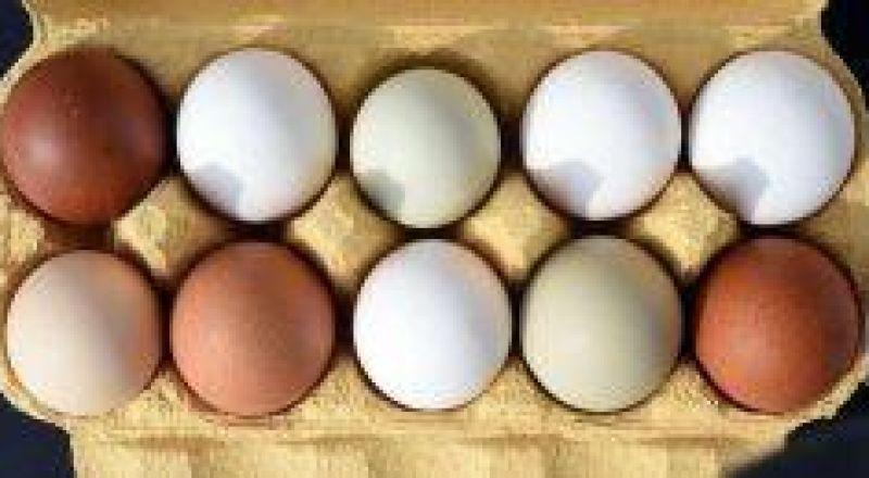 وزارة الزراعة: سيتم رفع اسعار البيض في البلاد